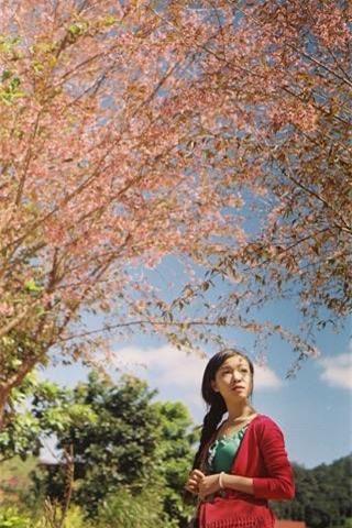 Lên Đà Lạt mùa này tuyệt như đi Nhật, có mai anh đào nở rộ rực hồng, trời lại rất xanh trong - Ảnh 10.