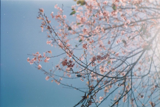 Lên Đà Lạt mùa này tuyệt như đi Nhật, có mai anh đào nở rộ rực hồng, trời lại rất xanh trong - Ảnh 6.