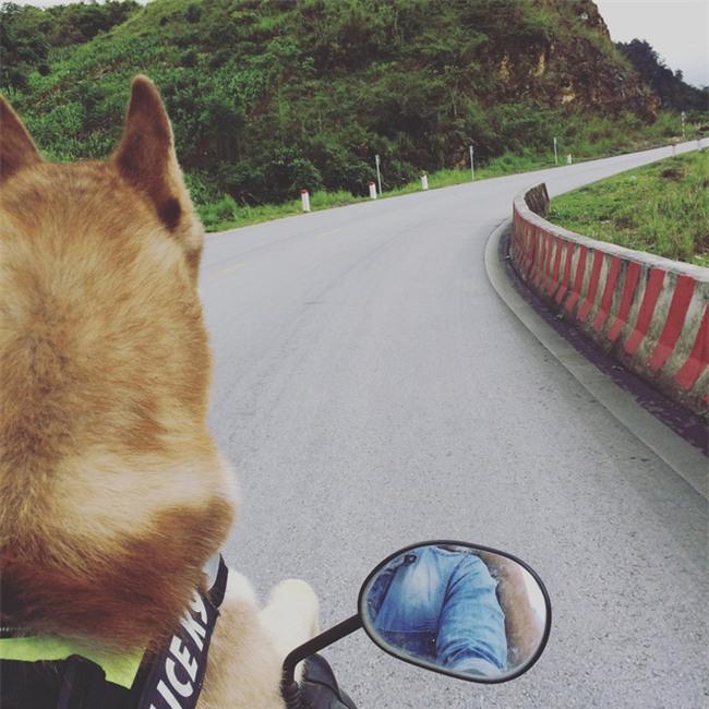 Câu chuyện về chàng trai chuyên đi phượt với cún cưng, thà nhịn ăn chứ không để boss đói - Ảnh 4.