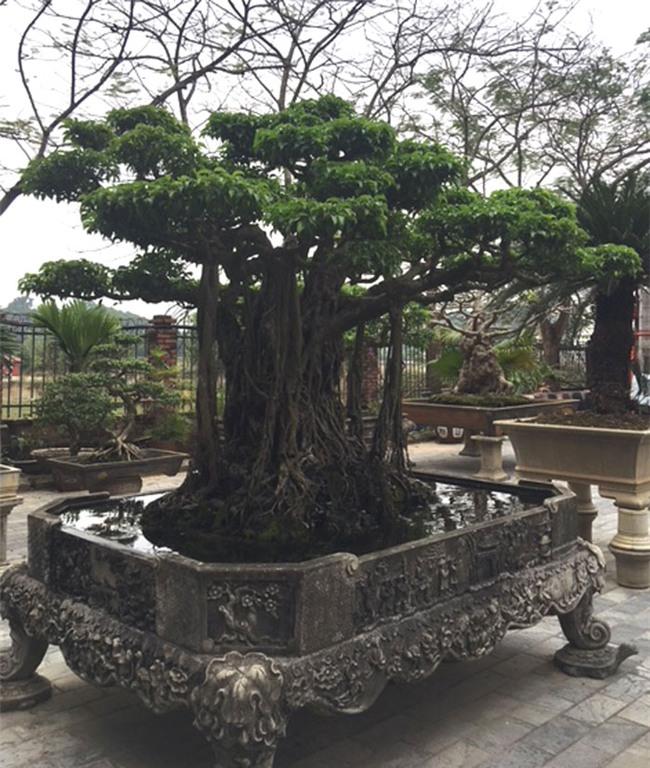 vườn cây cảnh,thú chơi cây cảnh,đại gia Hà thành,cây cảnh,trồng cây cảnh
