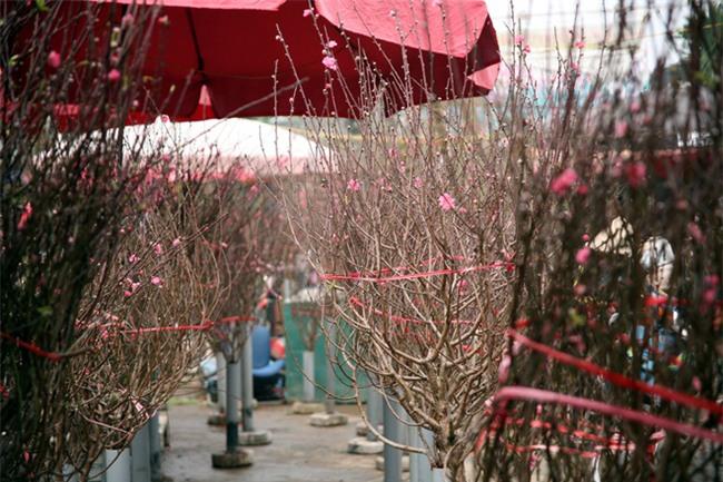 Hà Nội: Ngày mùng 1 âm lịch cuối cùng trong năm, hoa tươi đắt hàng - Ảnh 11.