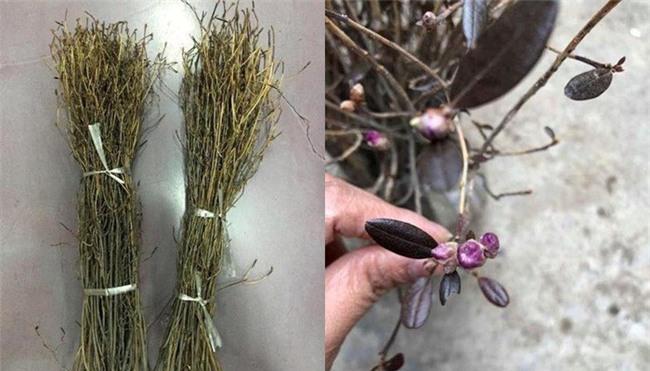 Sự thật về hoa đỗ quyên ngủ đông - cành củi khô bị tẩm hóa chất? - Ảnh 4.