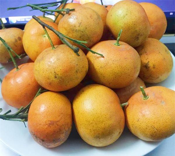 Dù là cam Canh xịn hay cam Canh được trồng ở các nơi khác, nếu biết cách chọn lựa, bạn vẫn sẽ mua về cho mình được những quả ngon, ngọt để thưởng thức (Ảnh: HC)