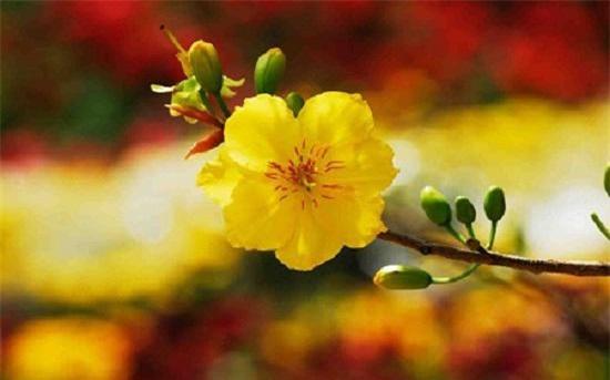 nhung loai hoa dep trung bay dip tet mang lai may man cho gia chu - 1
