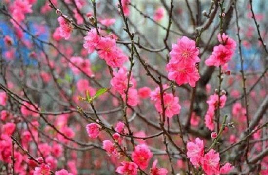 nhung loai hoa dep trung bay dip tet mang lai may man cho gia chu - 2