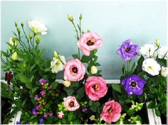 nhung loai hoa dep trung bay dip tet mang lai may man cho gia chu - 4
