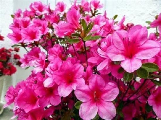 nhung loai hoa dep trung bay dip tet mang lai may man cho gia chu - 5