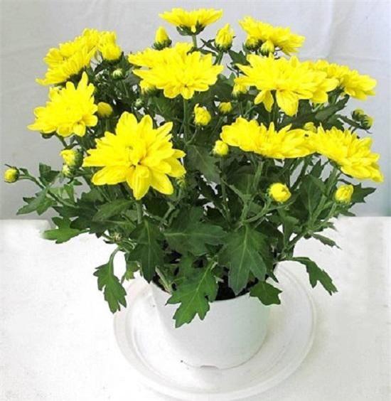 nhung loai hoa dep trung bay dip tet mang lai may man cho gia chu - 6
