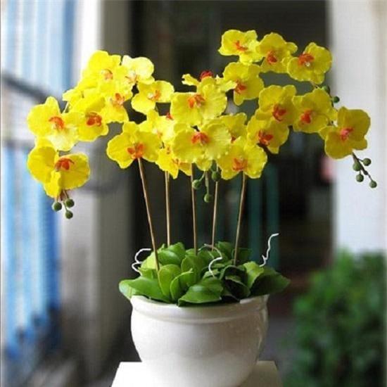 nhung loai hoa dep trung bay dip tet mang lai may man cho gia chu - 7