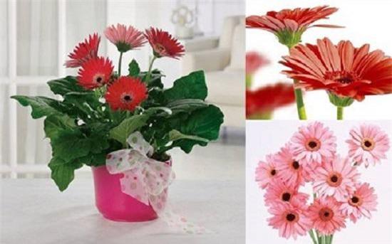 nhung loai hoa dep trung bay dip tet mang lai may man cho gia chu - 9