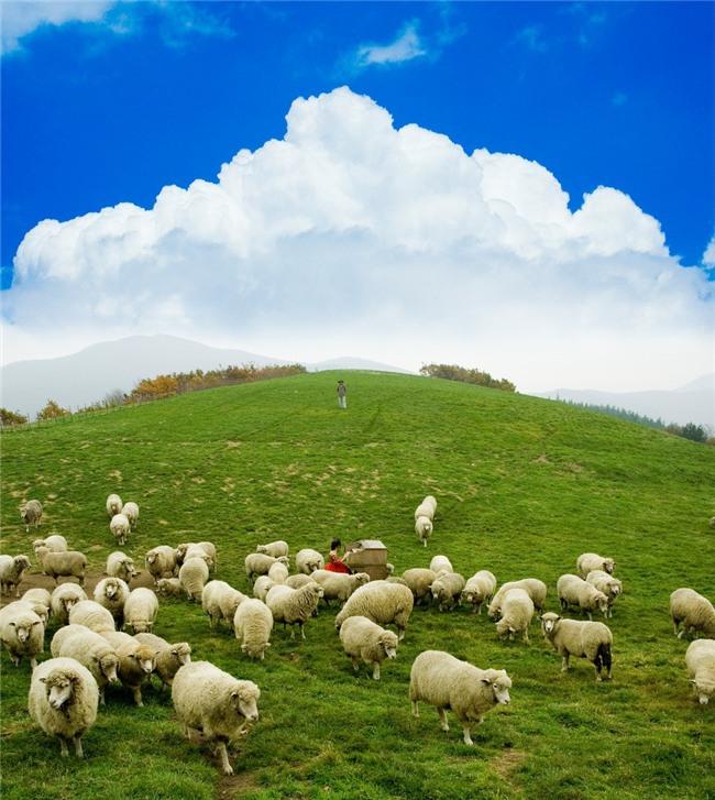 Đến Hàn Quốc, nhớ ghé trại cừu đẹp như phim mà Xuân Trường đã hẹn hò cùng bạn gái tin đồn - Ảnh 7.