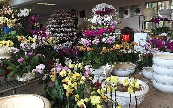 thị trường hoa tết,hoa lan,lan hồ điệp,Thị trường Tết,