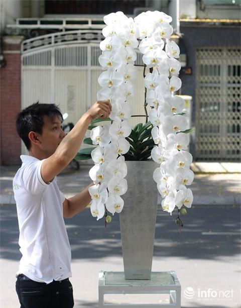 thị trường Tết, hoa tết, lan hồ điệp, thị trường hoa
