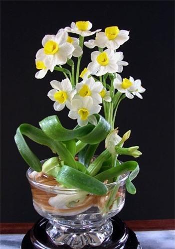 4 loại hoa cực đẹp trưng Tết, nhưng nhà có bà bầu thì đừng dại mua về nếu không chẳng khác nào rước họa-2