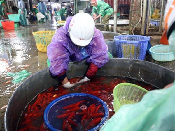 Thị trường Tết ông Công, ông Táo: Cá chép cháy hàng, vàng mã vẫn hút khách
