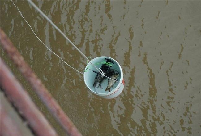 Thanh niên Hà thành kêu gọi Thả cá đừng thả túi nilon - Ảnh 5.