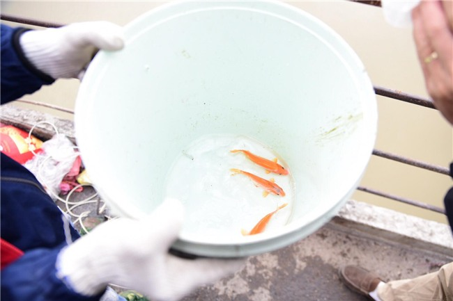 Tết ông Táo: Rét cắt da, em bé theo cha đi thả cá chép sáng sớm