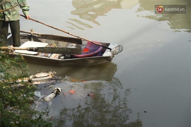 Clip: Cá chép tiễn Táo quân vừa bơi tới cầu Diễn đã bị chích điện lôi lên bờ - Ảnh 3.