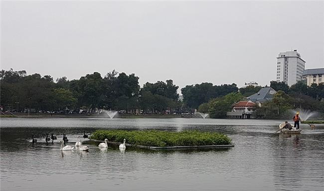 Xem xét lắp camera ở hồ Thiền Quang để bảo vệ thiên nga - Ảnh 1.