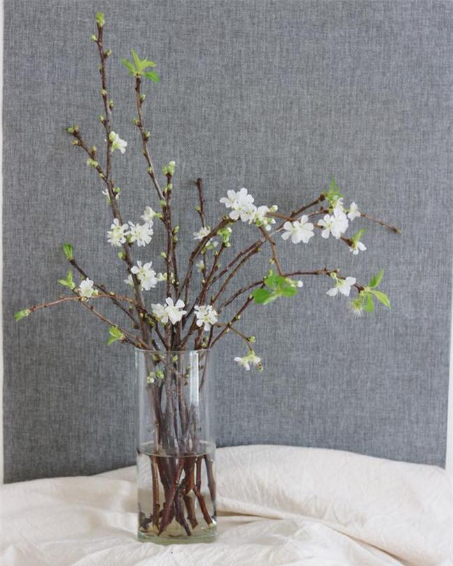 4 loại hoa nhập khẩu đắt tiền đang được chị em săn lùng ráo riết để trưng Tết 2018 - Ảnh 3.