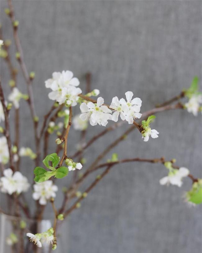 4 loại hoa nhập khẩu đắt tiền đang được chị em săn lùng ráo riết để trưng Tết 2018 - Ảnh 6.