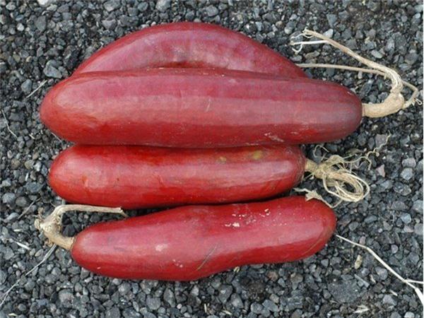 hoa quả độc lạ,quả trưng Tết,bưởi đỏ,chuối đỏ