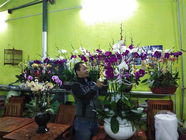 vườn lan,hoa lan
