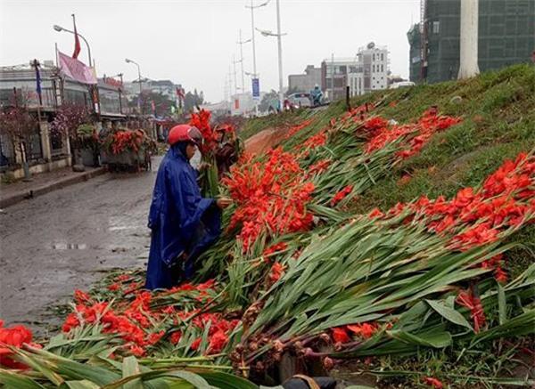 Hà Nội: Hoa tươi bằng 1/10 so với trước Tết, dân buôn vứt đổ đống tại chợ Quảng An - Ảnh 2.