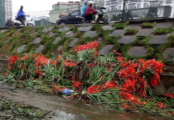 Hà Nội: Hoa tươi bằng 1/10 so với trước Tết, dân buôn vứt đổ đống tại chợ Quảng An - Ảnh 7.