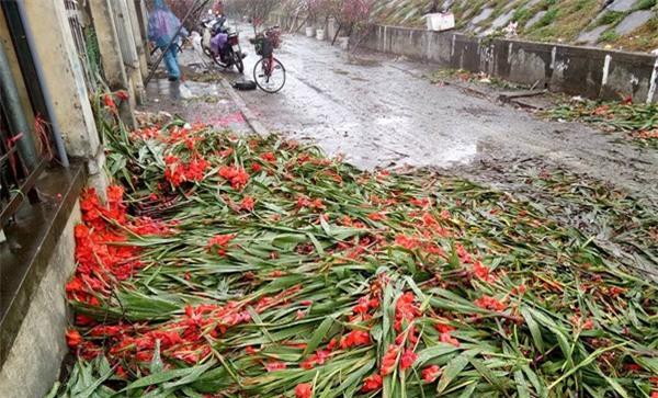 Hà Nội: Hoa tươi bằng 1/10 so với trước Tết, dân buôn vứt đổ đống tại chợ Quảng An - Ảnh 8.