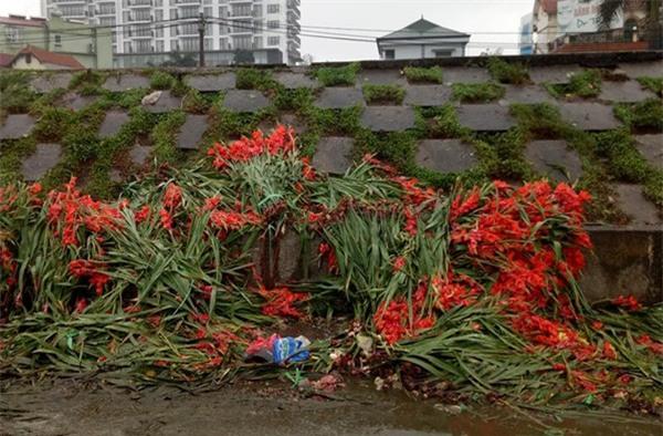 Hà Nội: Hoa tươi bằng 1/10 so với trước Tết, dân buôn vứt đổ đống tại chợ Quảng An - Ảnh 9.