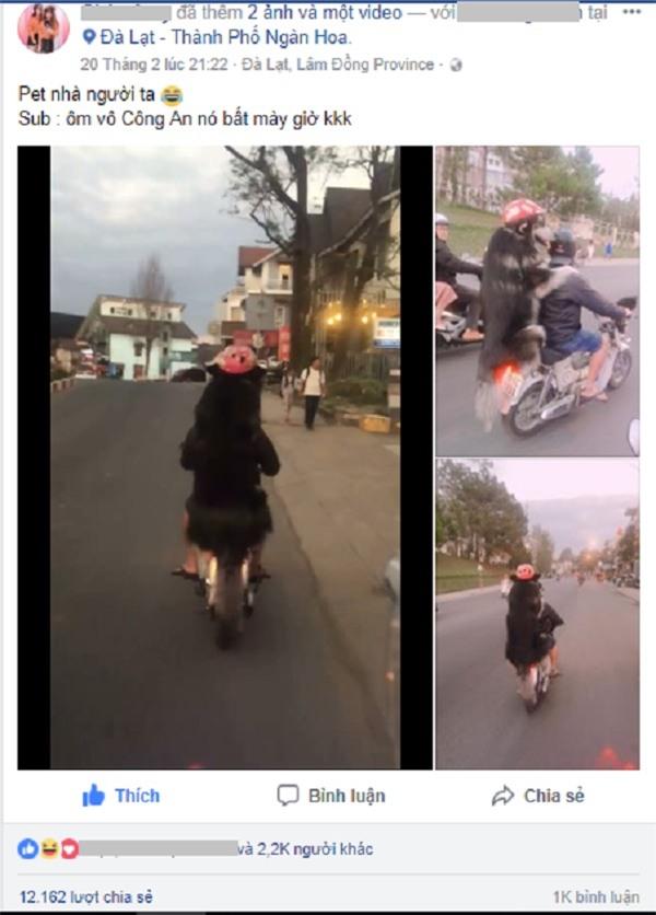 Chàng trai Đà Lạt đi xe cub, trước chở hoàng thượng mèo, sau chở boss đội mũ cực ngầu-1