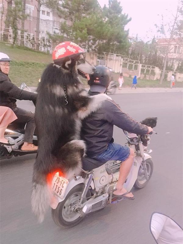 Chàng trai Đà Lạt đi xe cub, trước chở hoàng thượng mèo, sau chở boss đội mũ cực ngầu-2
