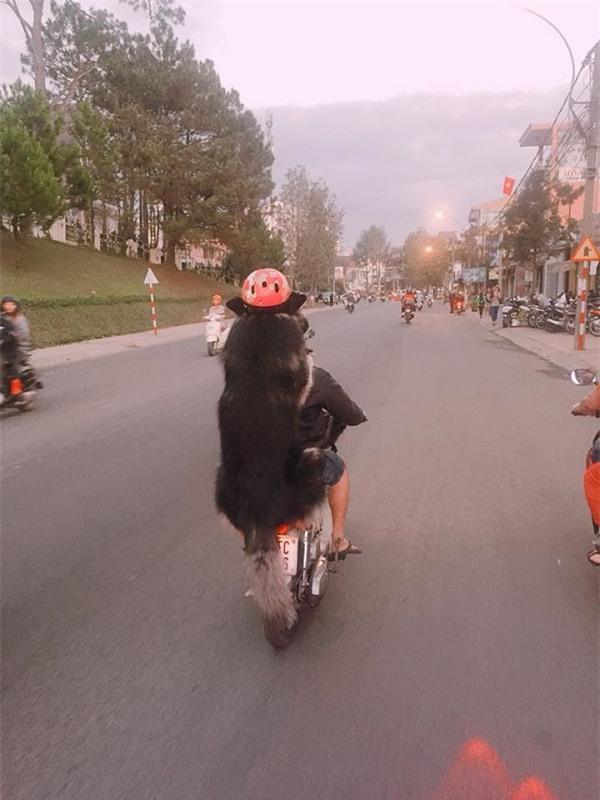 Chàng trai Đà Lạt đi xe cub, trước chở hoàng thượng mèo, sau chở boss đội mũ cực ngầu-3