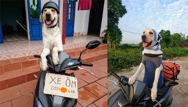 Chú chó nổi nhất MXH: Giải Toán siêu hay, có người quản lý hình ảnh riêng - Ảnh 2.