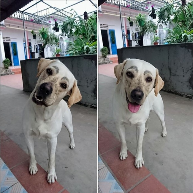 Chú chó nổi nhất MXH: Giải Toán siêu hay, có người quản lý hình ảnh riêng - Ảnh 6.