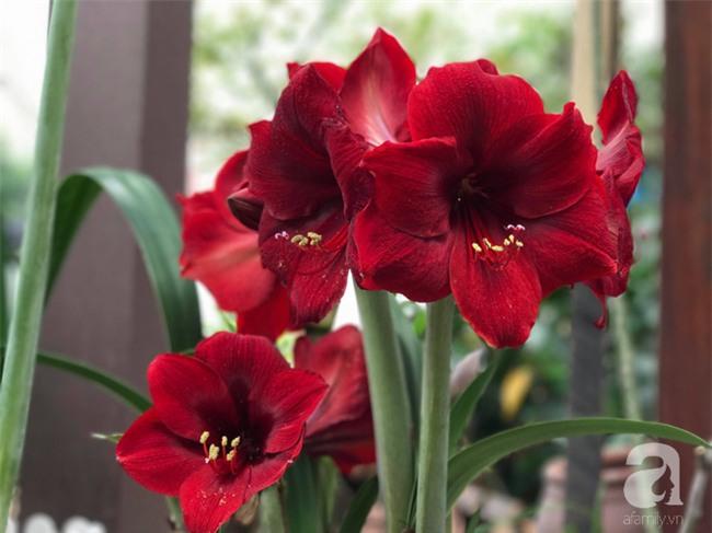 Khu vườn có đến hơn 300 gốc hoa Lan huệ đẹp như chốn thiên đường của người phụ nữ Hà Thành - Ảnh 11.