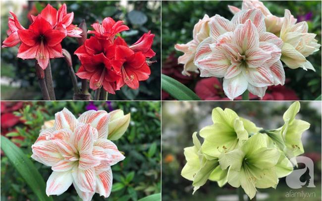 Khu vườn có đến hơn 300 gốc hoa Lan huệ đẹp như chốn thiên đường của người phụ nữ Hà Thành - Ảnh 15.