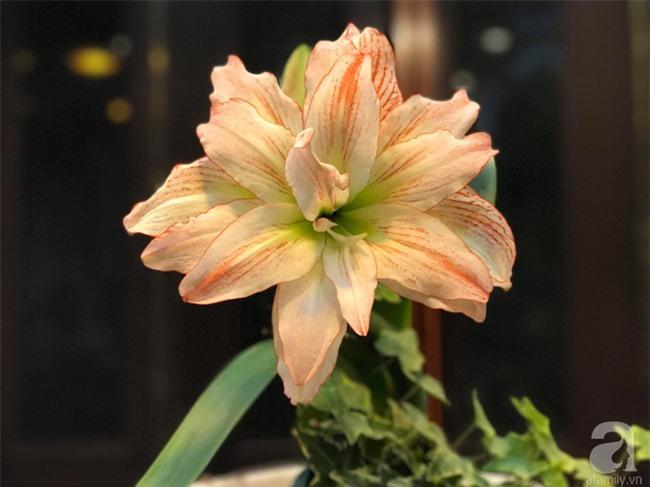 Khu vườn có đến hơn 300 gốc hoa Lan huệ đẹp như chốn thiên đường của người phụ nữ Hà Thành - Ảnh 19.