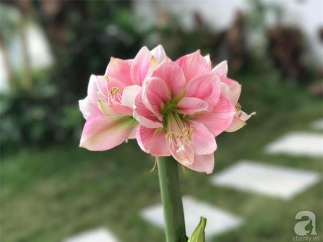 Khu vườn có đến hơn 300 gốc hoa Lan huệ đẹp như chốn thiên đường của người phụ nữ Hà Thành - Ảnh 20.