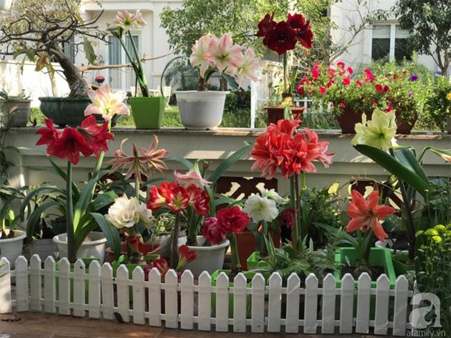 Khu vườn có đến hơn 300 gốc hoa Lan huệ đẹp như chốn thiên đường của người phụ nữ Hà Thành - Ảnh 3.