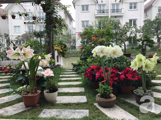 Khu vườn có đến hơn 300 gốc hoa Lan huệ đẹp như chốn thiên đường của người phụ nữ Hà Thành - Ảnh 4.