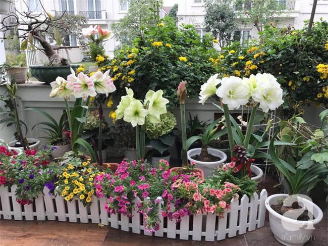Khu vườn có đến hơn 300 gốc hoa Lan huệ đẹp như chốn thiên đường của người phụ nữ Hà Thành - Ảnh 6.