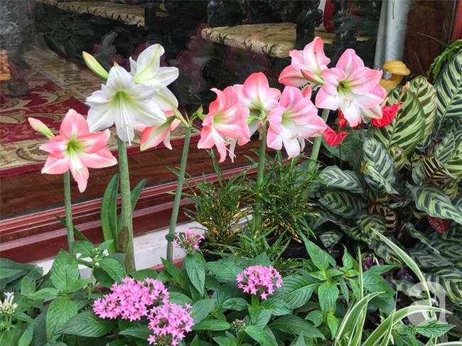 Khu vườn có đến hơn 300 gốc hoa Lan huệ đẹp như chốn thiên đường của người phụ nữ Hà Thành - Ảnh 7.