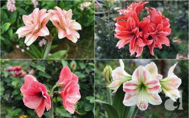 Khu vườn có đến hơn 300 gốc hoa Lan huệ đẹp như chốn thiên đường của người phụ nữ Hà Thành - Ảnh 8.