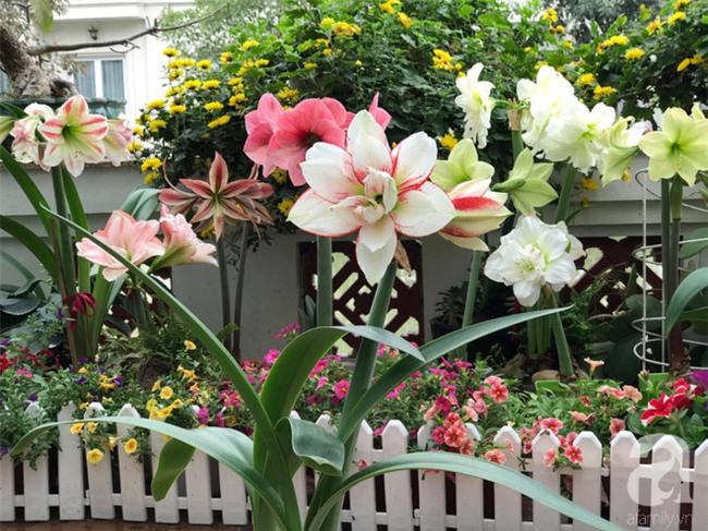 Khu vườn có đến hơn 300 gốc hoa Lan huệ đẹp như chốn thiên đường của người phụ nữ Hà Thành - Ảnh 9.