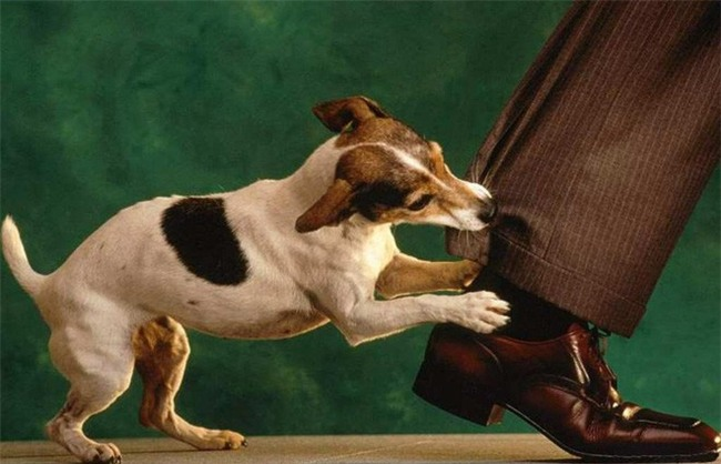 Clip bé trai sủa nghi do chó dại cắn, bác sĩ lên tiếng: Không có chuyện khi phát bệnh dại, bệnh nhân sủa như vật nuôi - Ảnh 3.