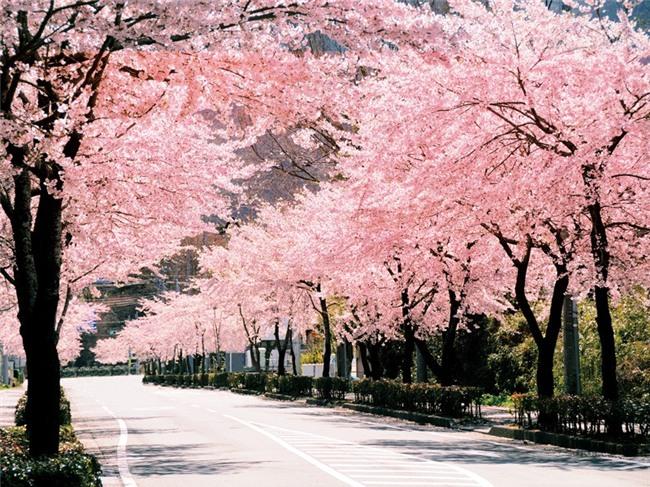 Bài tập về nhà: Phải sống hạnh phúc của thầy giáo Nhật trong lễ tốt nghiệp khiến học sinh xúc động - Ảnh 2.