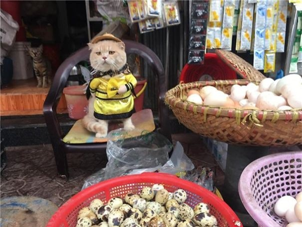 Hết bán cá lại trông phản thịt, chú mèo nổi tiếng khắp chợ Hải Phòng lên trang nhất tạp chí nước ngoài - Ảnh 10.