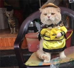 Hết bán cá lại trông phản thịt, chú mèo nổi tiếng khắp chợ Hải Phòng lên trang nhất tạp chí nước ngoài - Ảnh 11.